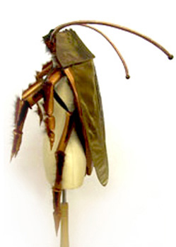 cockroach insect halloween costume maker